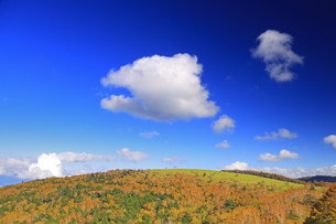 武石峰南東斜面からから望む紅葉の焼山とわた雲の写真素材 [FYI04728638]