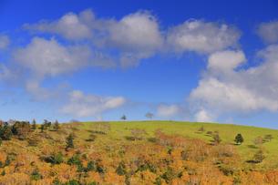 武石峰南東斜面からから望む焼山の二本の木とわた雲の写真素材 [FYI04728641]