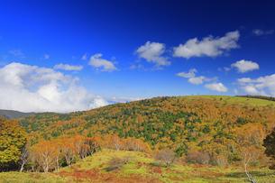 武石峰南東斜面からから望む紅葉の焼山と雲の写真素材 [FYI04728642]