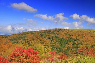 武石峰南東斜面からから望む紅葉の焼山の写真素材 [FYI04728645]
