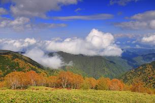 美ケ原自然保護センター付近から望む上田方向の紅葉の樹林と雲の写真素材 [FYI04728651]