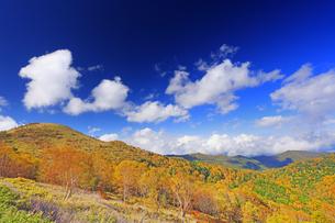 武石峰南東斜面からから望む紅葉の樹林と武石峰の写真素材 [FYI04728652]