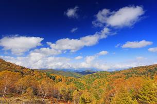 武石峰南東斜面からから望む北方向の紅葉の樹林とわた雲の写真素材 [FYI04728653]