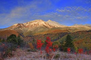 乗鞍高原の大カエデ付近から望む朝の乗鞍岳と紅葉の樹林の写真素材 [FYI04728660]