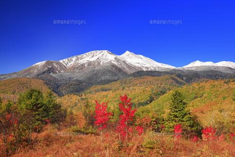 乗鞍高原の大カエデ付近から望む新雪の乗鞍岳と紅葉の樹林の写真素材 [FYI04728661]
