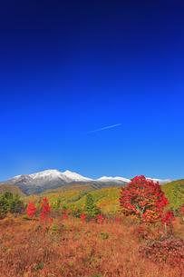 紅葉の乗鞍高原の大カエデと乗鞍岳と飛行機雲の写真素材 [FYI04728665]