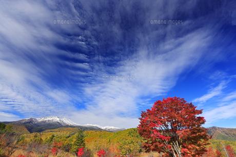 紅葉の乗鞍高原の大カエデと乗鞍岳と秋空の写真素材 [FYI04728674]