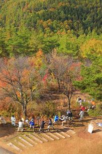 令和2年大北地区森林祭のヤマツツジ植樹の写真素材 [FYI04728696]