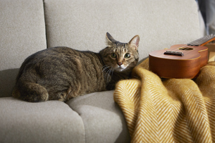 ソファの上に座っている猫とウクレレの写真素材 [FYI04728858]