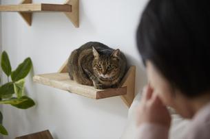ねこステップに座る猫と女性の写真素材 [FYI04728869]