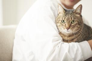人に抱きかかえられている猫の写真素材 [FYI04728887]