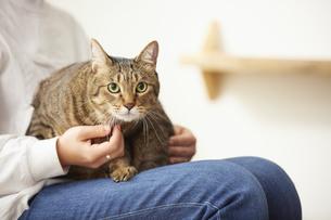 人に抱きかかえられている猫の写真素材 [FYI04728889]