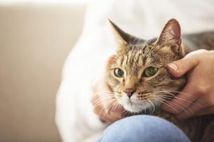 人に抱きかかえられている猫の写真素材 [FYI04728894]