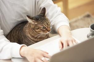テレワーク中の人と猫の写真素材 [FYI04728896]