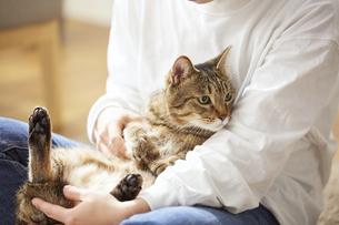 人に抱きかかえられている猫の写真素材 [FYI04728901]