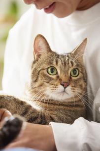 人に抱きかかえられている猫の写真素材 [FYI04728902]