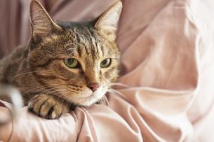 人に抱きかかえられている猫の写真素材 [FYI04728906]