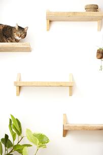 猫ステップの上に座っている猫の写真素材 [FYI04728911]