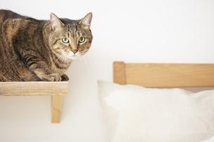 猫ステップの上に座っている猫の写真素材 [FYI04728914]
