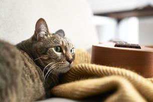 ソファの上に座る猫とブランケットとウクレレの写真素材 [FYI04728998]