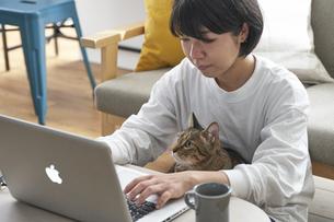 テレワーク中の女性と猫の写真素材 [FYI04729013]