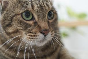 猫の写真素材 [FYI04729015]