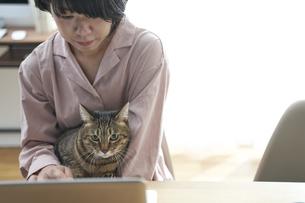 パソコンを触っている女性と膝の上の猫の写真素材 [FYI04729017]