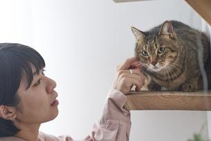 猫と女性の写真素材 [FYI04729019]