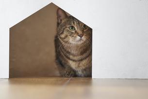 壁の穴からこちらの様子を伺っている猫の写真素材 [FYI04729023]