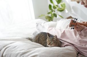 ベッドの上でウクレレを弾く女性と猫の写真素材 [FYI04729029]