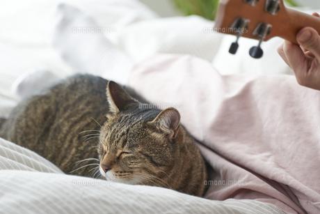 ベッドの上でウクレレを弾く女性と猫の写真素材 [FYI04729030]