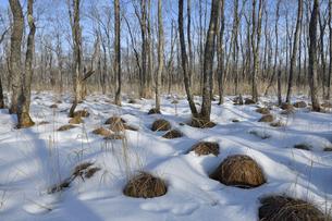 冬の釧路湿原(北海道・釧路町)の写真素材 [FYI04729106]