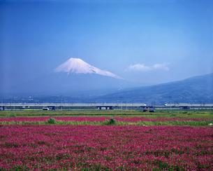 富士山 レンゲ畑 東海道新幹線 0系の写真素材 [FYI04729256]