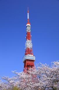 東京タワーと桜の写真素材 [FYI04729296]