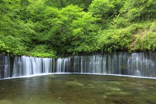 軽井沢の白糸の滝の写真素材 [FYI04729303]