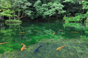 栃木県 出流原弁天池の写真素材 [FYI04729305]