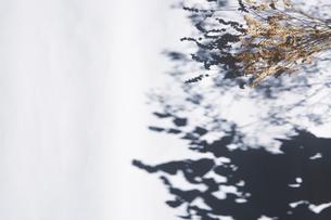 自然光とドライフラワーのある暮らしの写真素材 [FYI04729389]