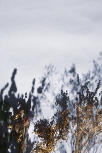自然光とドライフラワーのある暮らしの写真素材 [FYI04729391]