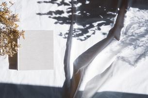 植物の影と生成りの生地のフォトアルバムの写真素材 [FYI04729405]