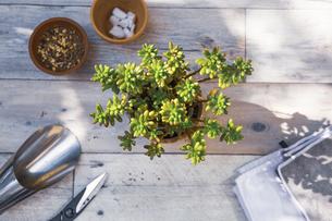 趣味の園芸の作業風景の写真素材 [FYI04729414]
