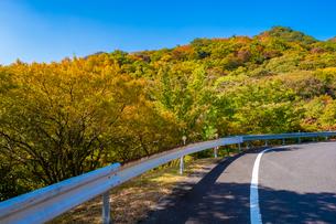 【香川県 小豆島】車道からみる秋の寒霞渓 紅葉の写真素材 [FYI04729501]