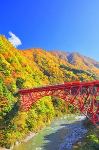 秋の黒部峡谷 トロッコ列車と紅葉の山並みの写真素材 [FYI04729563]