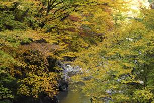 【 奥秩父 】 中津峡 紅葉の季節の写真素材 [FYI04729609]