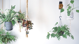 吊るし植物のハンギンググリーンがある室内の写真素材 [FYI04729974]
