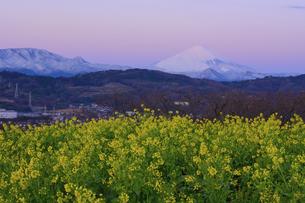 神奈川県二宮町 吾妻山公園 夜明け前の富士山と菜の花の写真素材 [FYI04730201]