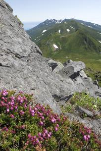 知床連山とエゾツガザクラ(北海道・知床)の写真素材 [FYI04730248]