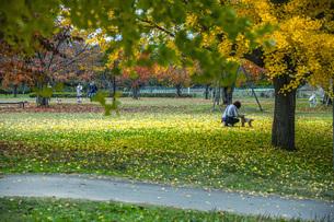 秋色の霞城公園の写真素材 [FYI04730297]