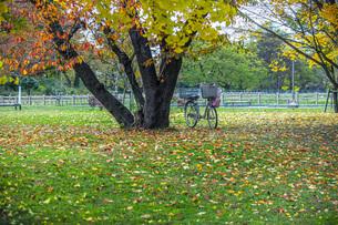 秋色の霞城公園の写真素材 [FYI04730302]