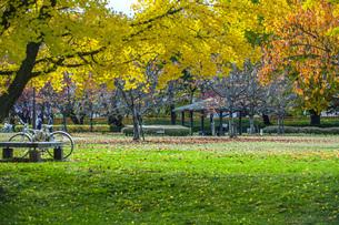 秋色の霞城公園の写真素材 [FYI04730304]