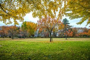 秋色の霞城公園の写真素材 [FYI04730306]